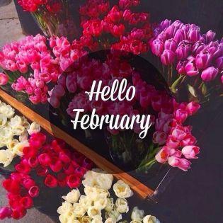235569-hello-february-flowers